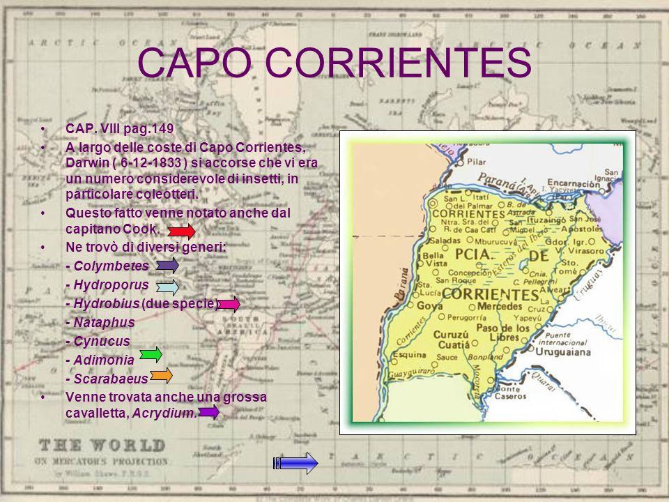 CAPO CORRIENTES CAP. VIII pag.149 A largo delle coste di Capo Corrientes, Darwin ( 6-12-1833 ) si accorse che vi era un numero considerevole di insett