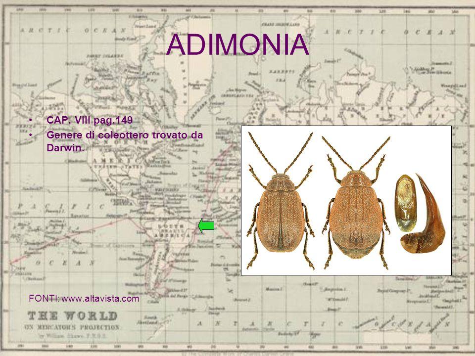 ADIMONIA CAP. VIII pag.149 Genere di coleottero trovato da Darwin. FONTI: www.altavista.com