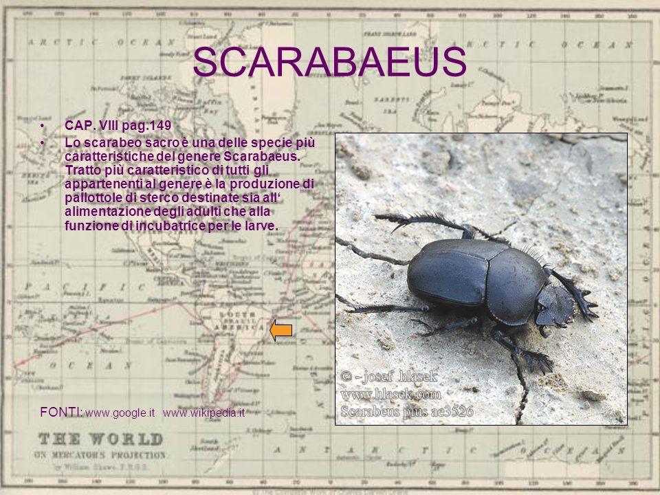 SCARABAEUS CAP. VIII pag.149 Lo scarabeo sacro è una delle specie più caratteristiche del genere Scarabaeus. Tratto più caratteristico di tutti gli ap