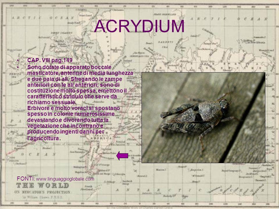 ACRYDIUM CAP. VIII pag.149 Sono dotate di apparato boccale masticatore, antenne di media lunghezza e due paia di ali. Sfregando le zampe anteriori con