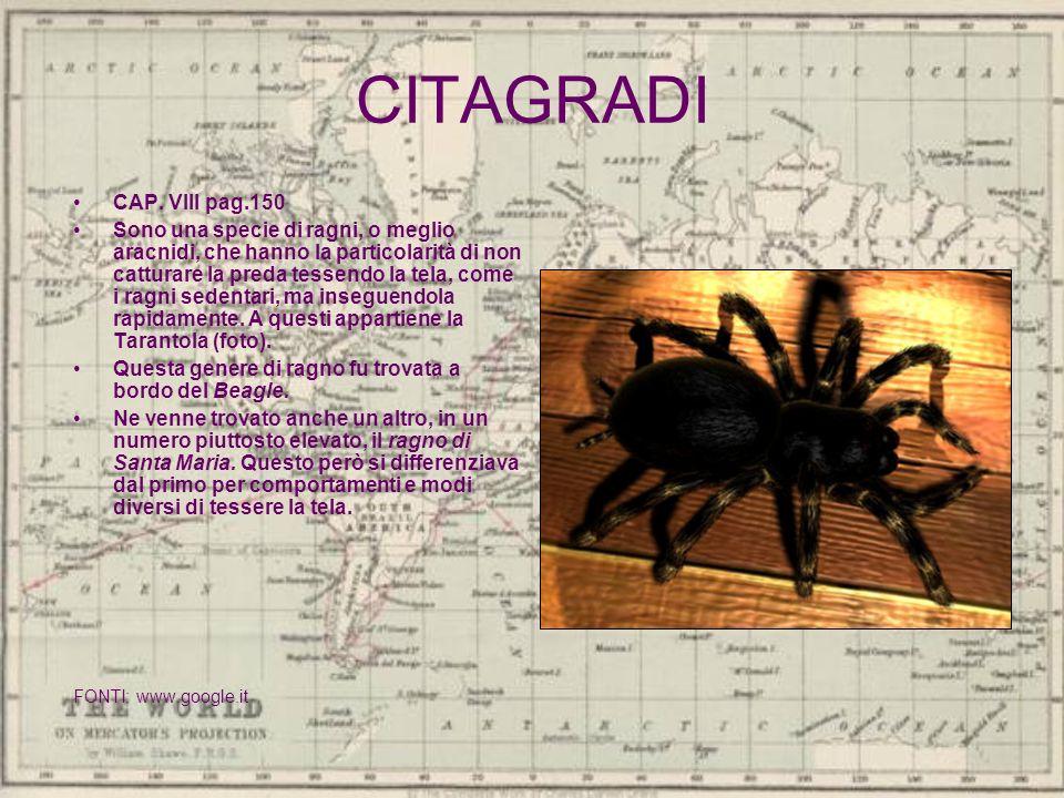 CITAGRADI CAP. VIII pag.150 Sono una specie di ragni, o meglio aracnidi, che hanno la particolarità di non catturare la preda tessendo la tela, come i