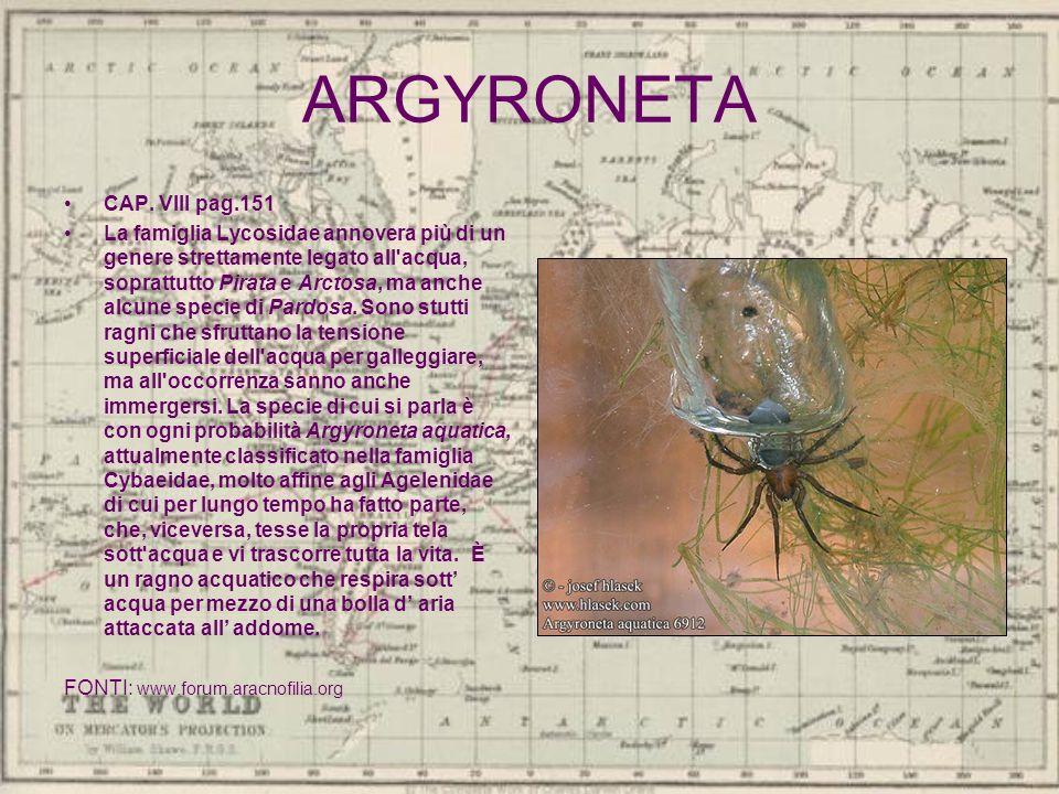 ARGYRONETA CAP. VIII pag.151 La famiglia Lycosidae annovera più di un genere strettamente legato all'acqua, soprattutto Pirata e Arctosa, ma anche alc