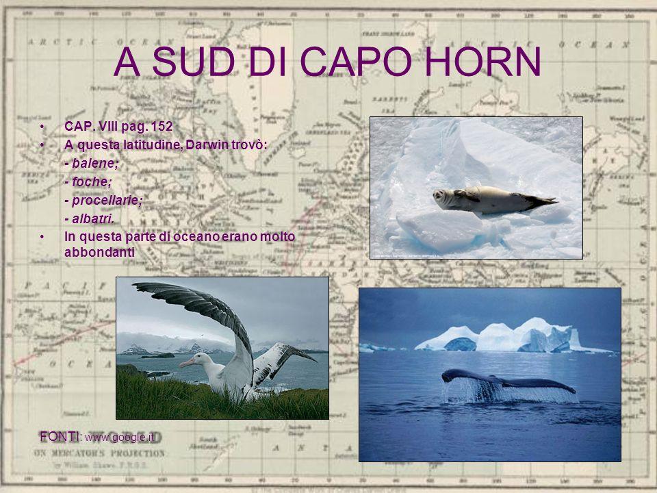 A SUD DI CAPO HORN CAP. VIII pag. 152 A questa latitudine, Darwin trovò: - balene; - foche; - procellarie; - albatri. In questa parte di oceano erano