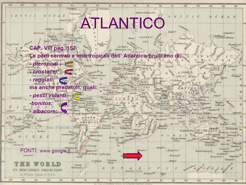 ATLANTICO CAP. VIII pag. 152 Le parti centrali e intertropicali dell Atlantico brulicano di: - pteropodi ; - crostacei; - raggiati; ma anche predatori
