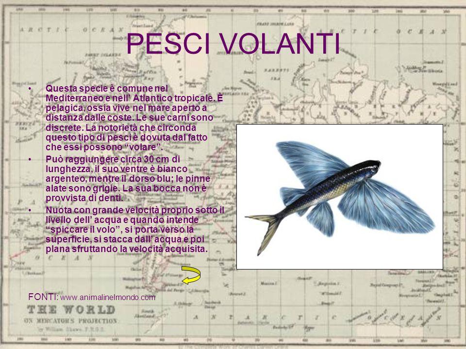 PESCI VOLANTI Questa specie è comune nel Mediterraneo e nell Atlantico tropicale. È pelagica, ossia vive nel mare aperto a distanza dalle coste. Le su