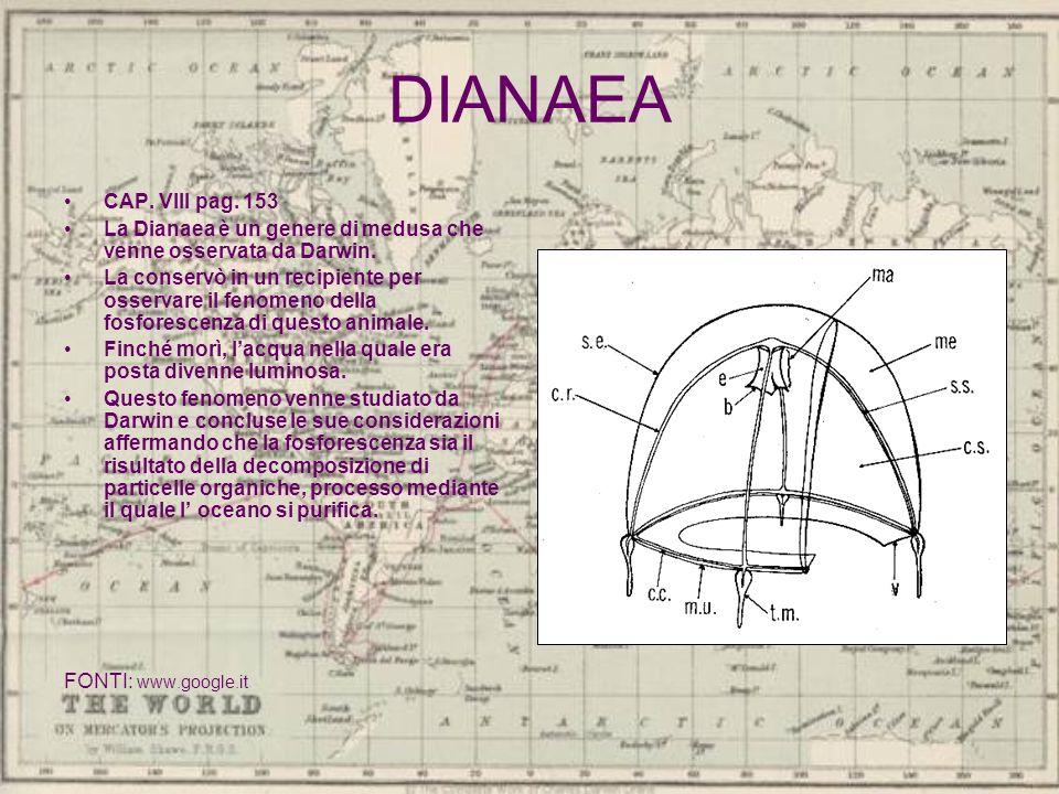 DIANAEA CAP. VIII pag. 153 La Dianaea è un genere di medusa che venne osservata da Darwin. La conservò in un recipiente per osservare il fenomeno dell