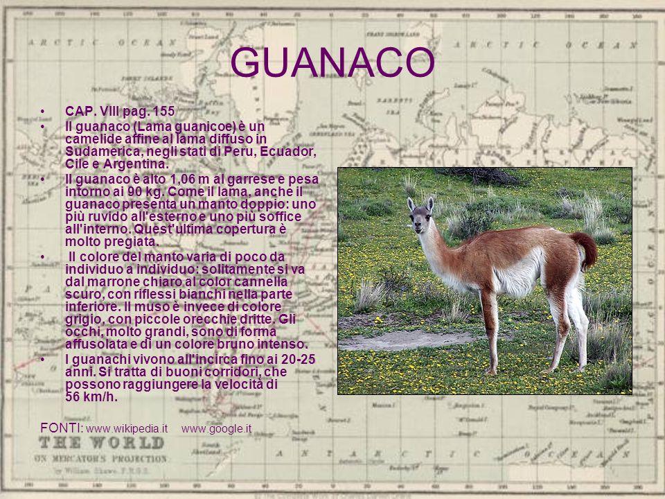 GUANACO CAP. VIII pag. 155 Il guanaco (Lama guanicoe) è un camelide affine al lama diffuso in Sudamerica, negli stati di Peru, Ecuador, Cile e Argenti