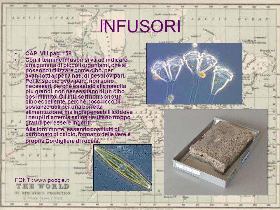 INFUSORI CAP. VIII pag. 159 Con il termine Infusori si va ad indicare una gamma di piccoli organismi, che si possono utilizzare come cibo, per avannot