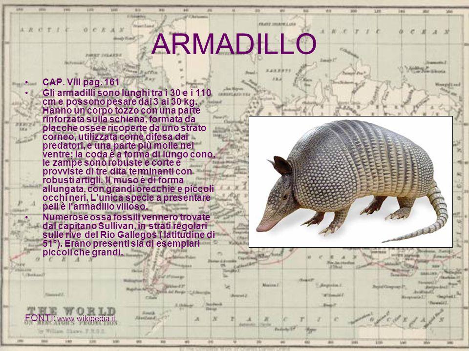 ARMADILLO CAP. VIII pag. 161 Gli armadilli sono lunghi tra i 30 e i 110 cm e possono pesare dai 3 ai 30 kg. Hanno un corpo tozzo con una parte rinforz