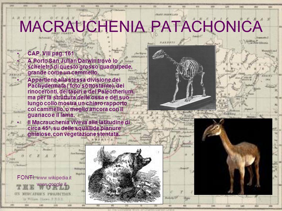 MACRAUCHENIA PATACHONICA CAP. VIII pag. 161 A Porto San Julian Darwin trovò lo scheletro di questo grosso quadrupede, grande come un cammello. Apparti
