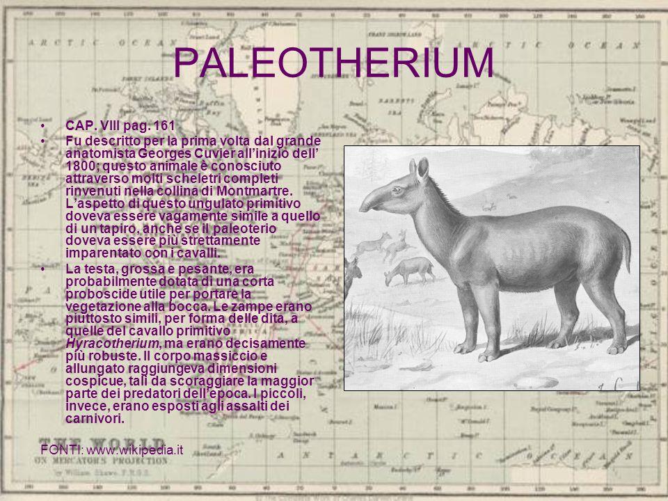 PALEOTHERIUM CAP. VIII pag. 161 Fu descritto per la prima volta dal grande anatomista Georges Cuvier allinizio dell 1800; questo animale è conosciuto