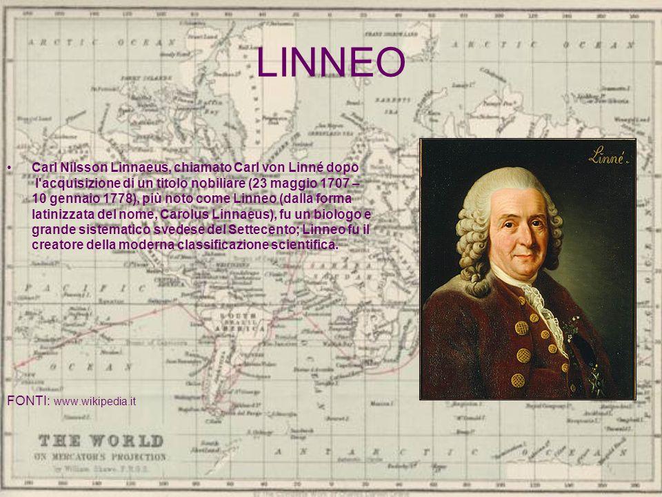 LINNEO Carl Nilsson Linnaeus, chiamato Carl von Linné dopo l'acquisizione di un titolo nobiliare (23 maggio 1707 – 10 gennaio 1778), più noto come Lin