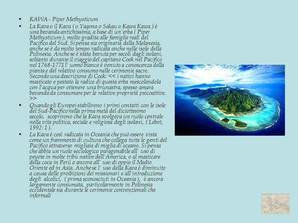 KAWA - Piper Methysticum La Kava o il Kava ( o Yaqona o Sakau o Kawa Kawa ) è una bevanda antichissima, a base di un erba ( Piper Methysticum ), molto gradita alle famiglie reali del Pacifico del Sud.