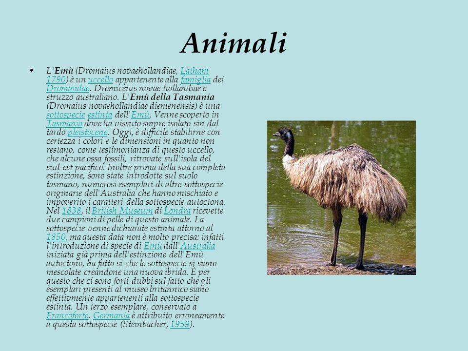 Animali L Emù (Dromaius novaehollandiae, Latham 1790) è un uccello appartenente alla famiglia dei Dromaiidae.
