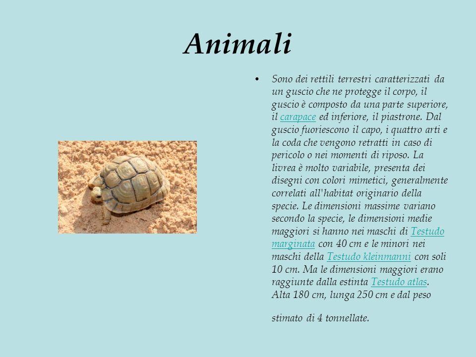 Animali Sono dei rettili terrestri caratterizzati da un guscio che ne protegge il corpo, il guscio è composto da una parte superiore, il carapace ed inferiore, il piastrone.