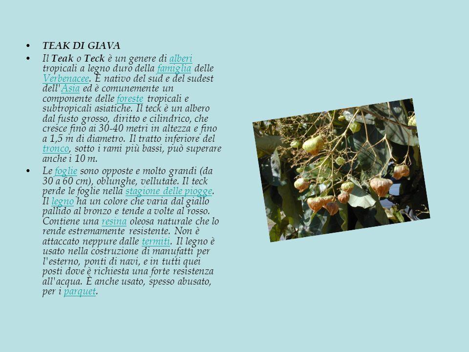 TEAK DI GIAVA Il Teak o Teck è un genere di alberi tropicali a legno duro della famiglia delle Verbenacee.