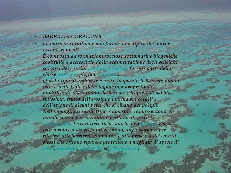BARRIERA CORALLINA La barriera corallina è una formazione tipica dei mari e oceani tropicali.