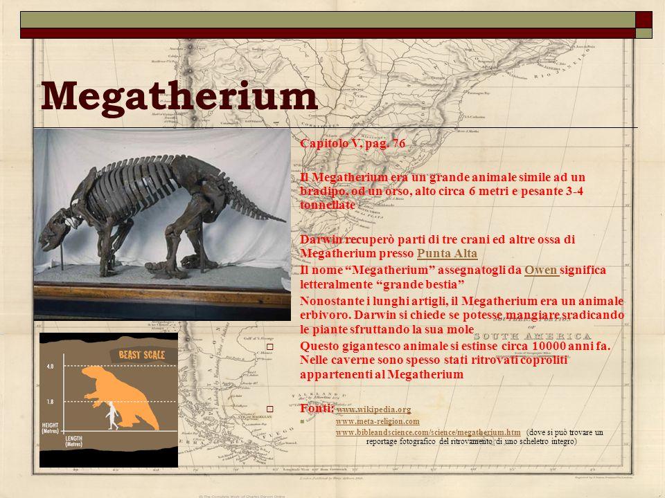 Megatherium Capitolo V, pag. 76 Il Megatherium era un grande animale simile ad un bradipo, od un orso, alto circa 6 metri e pesante 3-4 tonnellate Dar