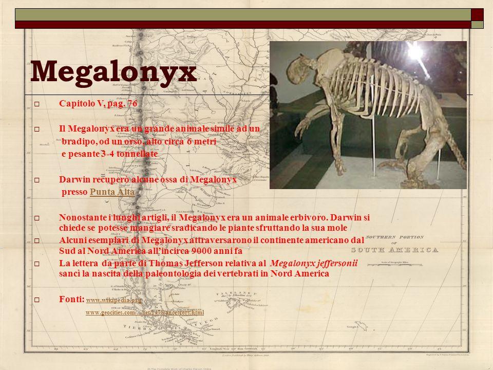 Megalonyx Capitolo V, pag. 76 Il Megalonyx era un grande animale simile ad un bradipo, od un orso, alto circa 6 metri e pesante 3-4 tonnellate Darwin