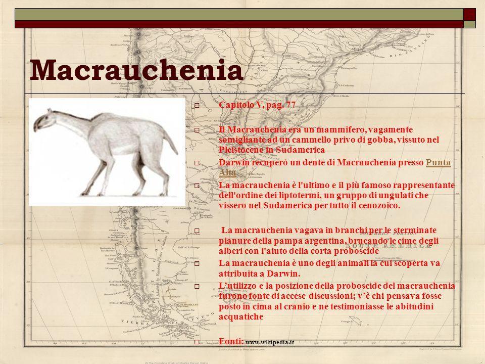 Macrauchenia Capitolo V, pag. 77 Il Macrauchenia era un mammifero, vagamente somigliante ad un cammello privo di gobba, vissuto nel Pleistocene in Sud