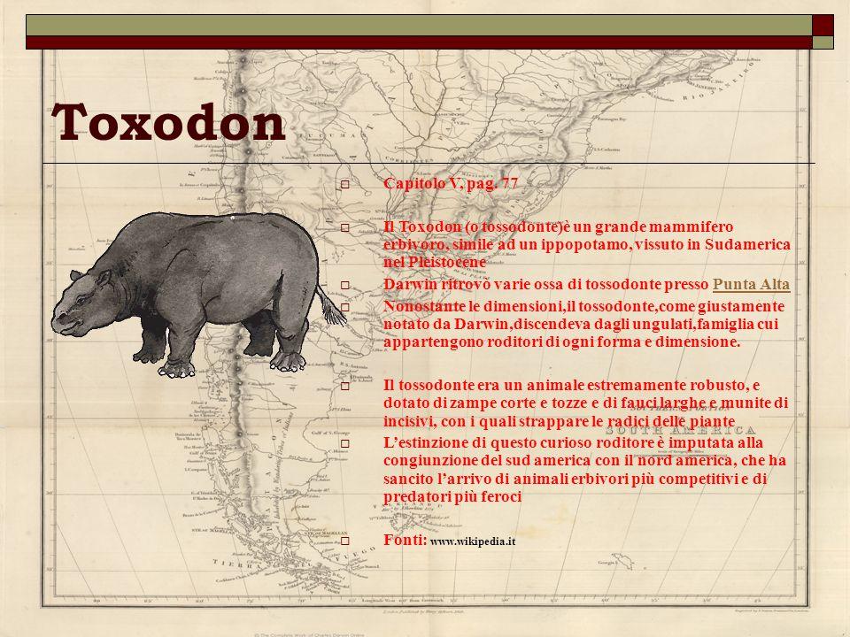 Toxodon Capitolo V, pag. 77 Il Toxodon (o tossodonte)è un grande mammifero erbivoro, simile ad un ippopotamo, vissuto in Sudamerica nel Pleistocene Da