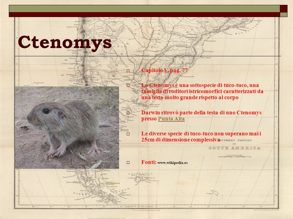 Ctenomys Capitolo V, pag. 77 Lo Ctenomys è una sottospecie di tuco-tuco, una famiglia di roditori istricomorfici caratterizzati da una testa molto gra