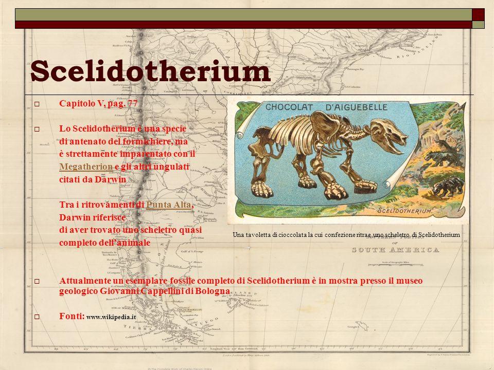Scelidotherium Capitolo V, pag. 77 Lo Scelidotherium è una specie di antenato del formichiere, ma è strettamente imparentato con il MegatherionMegathe