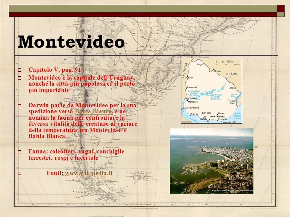 Montevideo Capitolo V, pag. 91 Montevideo è la capitale dellUruguay, nonché la città più popolosa ed il porto più importante Darwin parte da Montevide