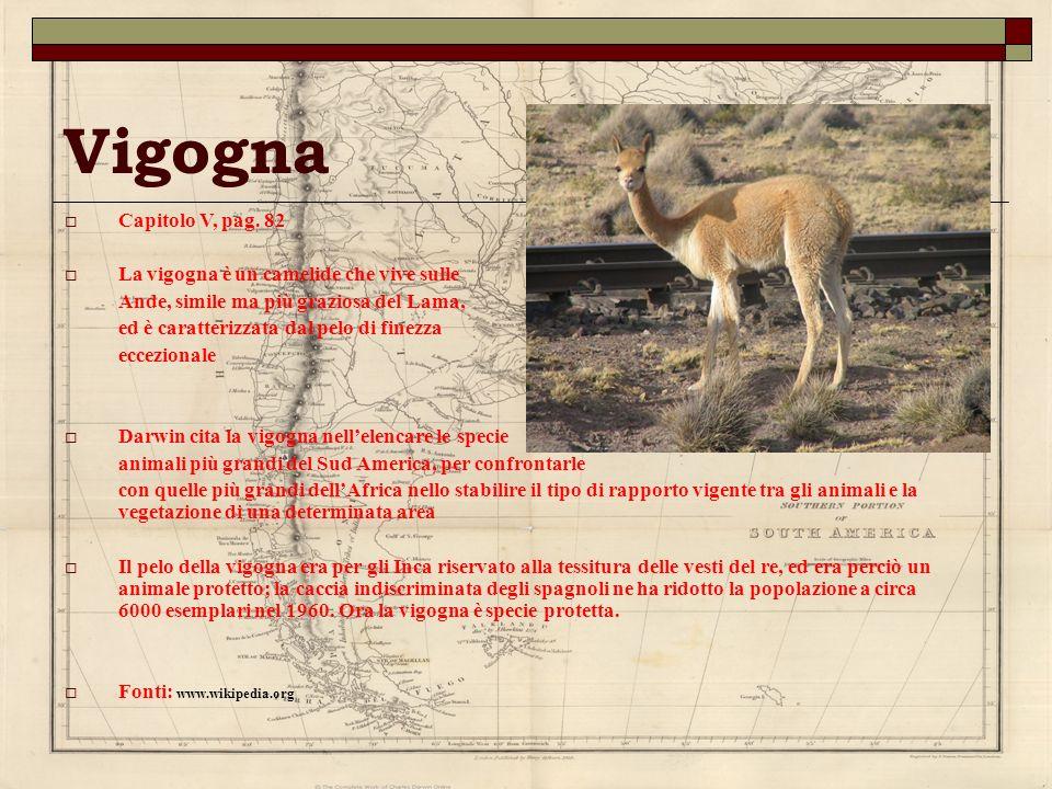 Vigogna Capitolo V, pag. 82 La vigogna è un camelide che vive sulle Ande, simile ma più graziosa del Lama, ed è caratterizzata dal pelo di finezza ecc