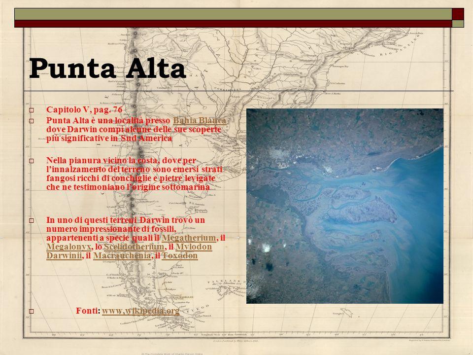 Punta Alta Capitolo V, pag. 76 Punta Alta è una località presso Bahia Blanca dove Darwin compì alcune delle sue scoperte più significative in Sud Amer