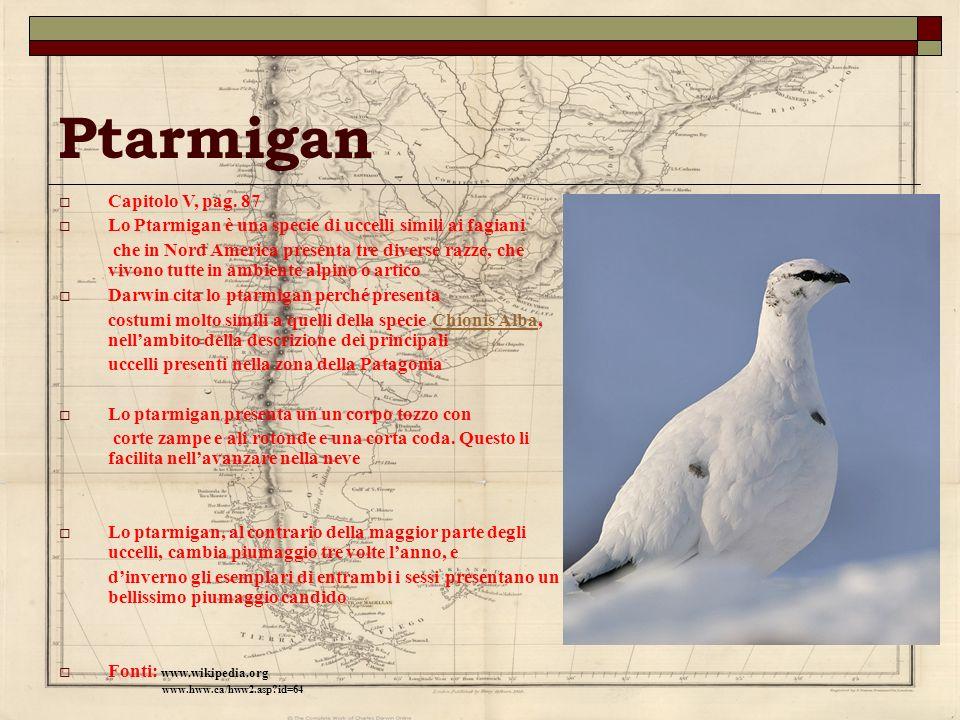 Ptarmigan Capitolo V, pag. 87 Lo Ptarmigan è una specie di uccelli simili ai fagiani che in Nord America presenta tre diverse razze, che vivono tutte