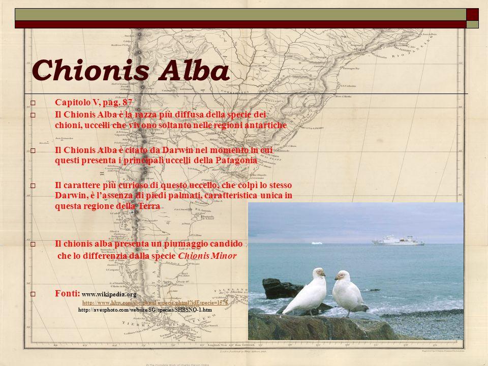 Chionis Alba Capitolo V, pag. 87 Il Chionis Alba è la razza più diffusa della specie dei chioni, uccelli che vivono soltanto nelle regioni antartiche