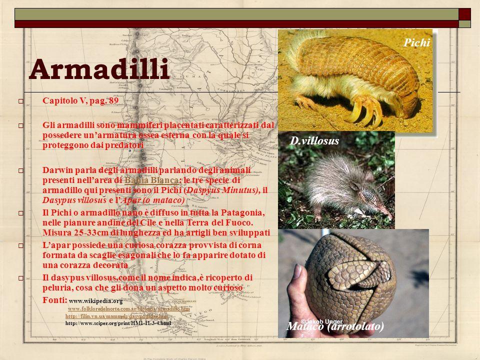 Armadilli Capitolo V, pag. 89 Gli armadilli sono mammiferi placentati caratterizzati dal possedere unarmatura ossea esterna con la quale si proteggono