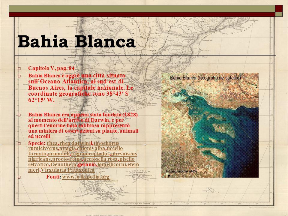 Bahia Blanca Capitolo V, pag. 84 Bahia Blanca è oggi è una città situata sullOceano Atlantico, al sud-est di Buenos Aires, la capitale nazionale. Le c