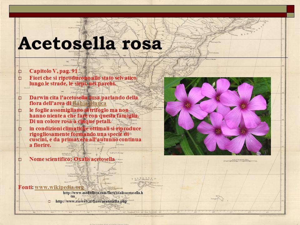 Acetosella rosa Capitolo V, pag. 91 Fiori che si riproducono allo stato selvatico lungo le strade, le siepi, nei parchi. Darwin cita lacetosella rosa