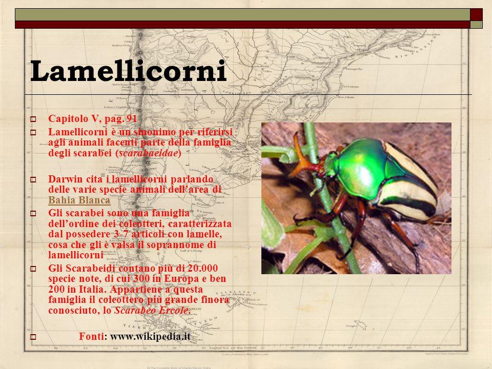 Lamellicorni Capitolo V, pag. 91 Lamellicorni è un sinonimo per riferirsi agli animali facenti parte della famiglia degli scarabei (scarabaeidae) Darw