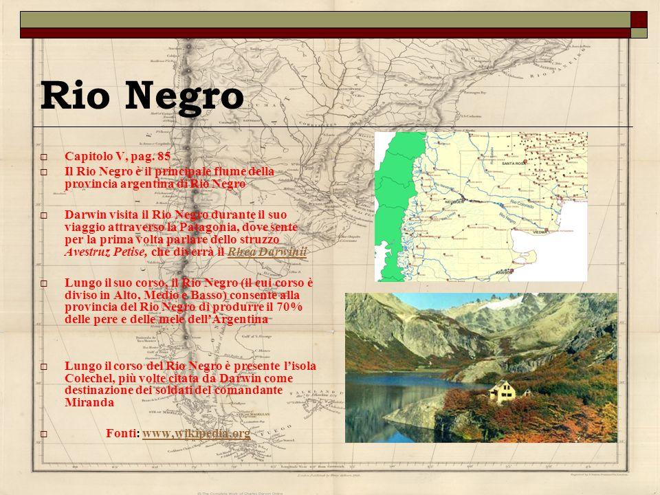 Rio Negro Capitolo V, pag. 85 Il Rio Negro è il principale fiume della provincia argentina di Rio Negro Darwin visita il Rio Negro durante il suo viag