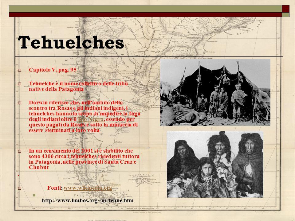 Tehuelches Capitolo V, pag. 95 Tehuelche è il nome collettivo delle tribù native della Patagonia Darwin riferisce che, nellambito dello scontro tra Ro