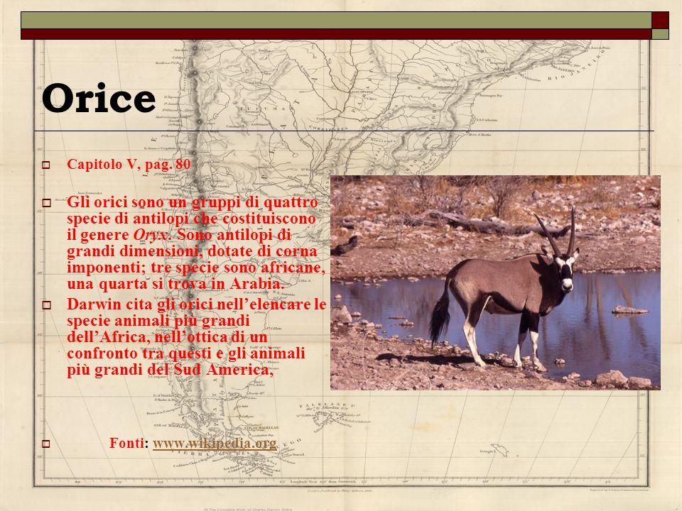 Orice Capitolo V, pag. 80 Gli orici sono un gruppi di quattro specie di antilopi che costituiscono il genere Oryx. Sono antilopi di grandi dimensioni,