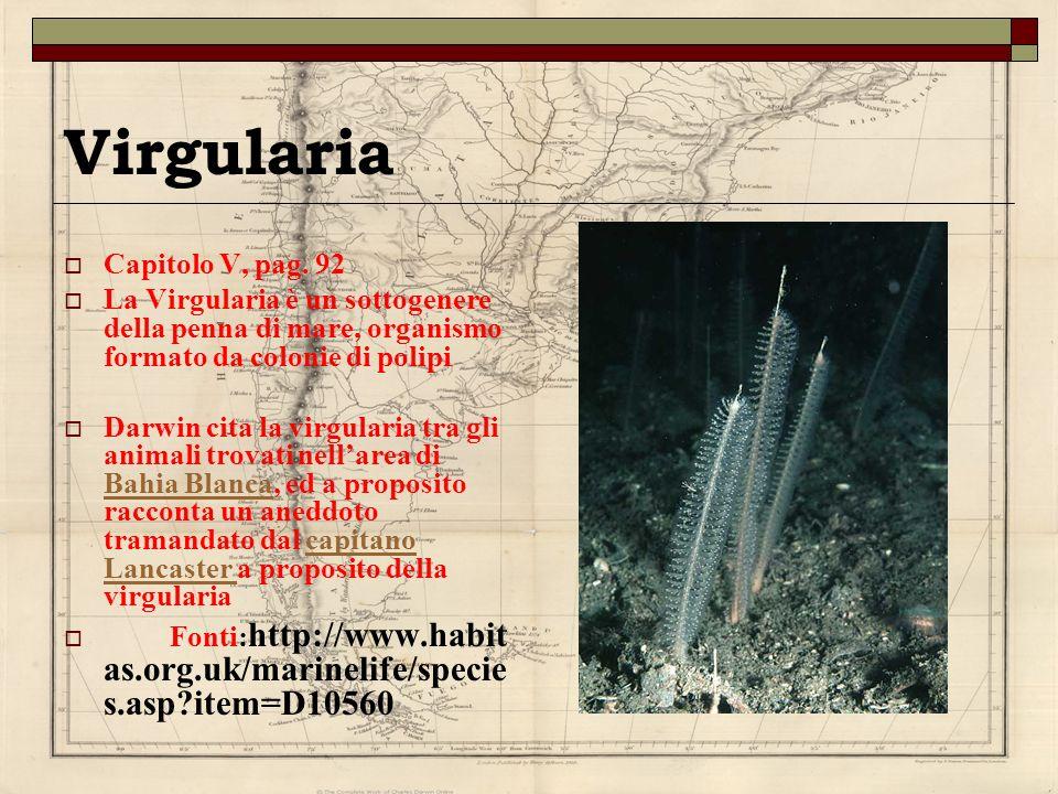 Virgularia Capitolo V, pag. 92 La Virgularia è un sottogenere della penna di mare, organismo formato da colonie di polipi Darwin cita la virgularia tr