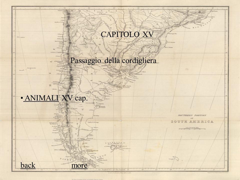 CAPITOLO XV Passaggio della cordigliera ANIMALI XV cap. ANIMALI backback moremore