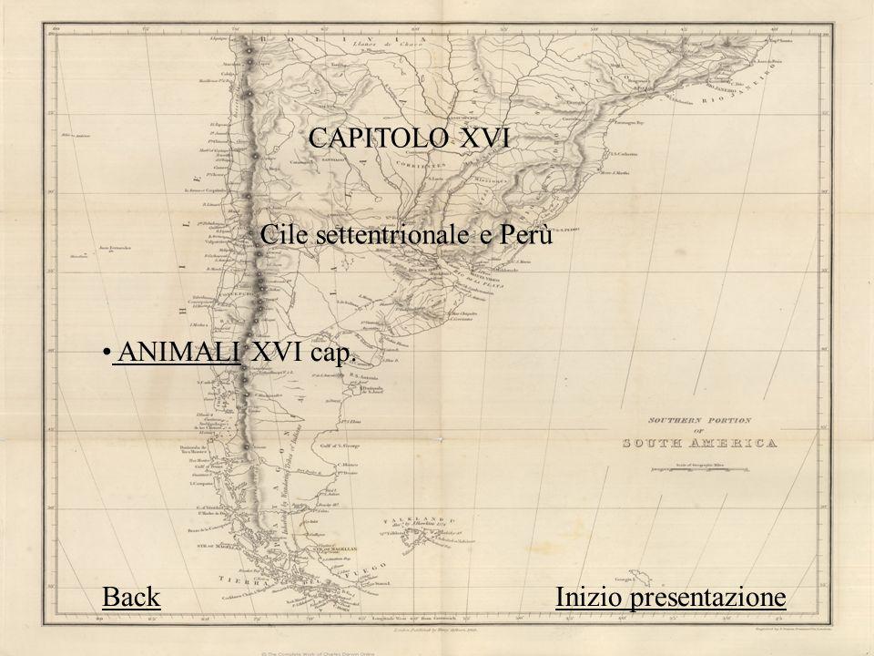 CAPITOLO XVI Cile settentrionale e Perù ANIMALI XVI cap. ANIMALI BackBack Inizio presentazioneInizio presentazione