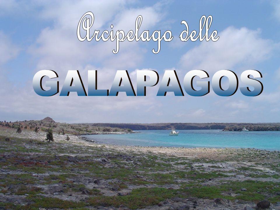 Isola di Isabela (Albemale) Chiamata così in onore della regina Isabella di Castiglia, che finanziò il viaggio di Colombo.