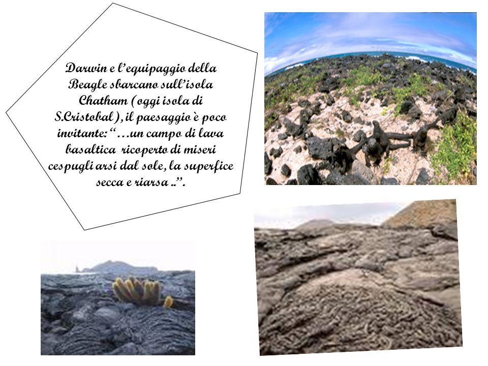 Darwin e lequipaggio della Beagle sbarcano sullisola Chatham (oggi isola di S.Cristobal), il paesaggio è poco invitante: …un campo di lava basaltica ricoperto di miseri cespugli arsi dal sole, la superfice secca e riarsa...