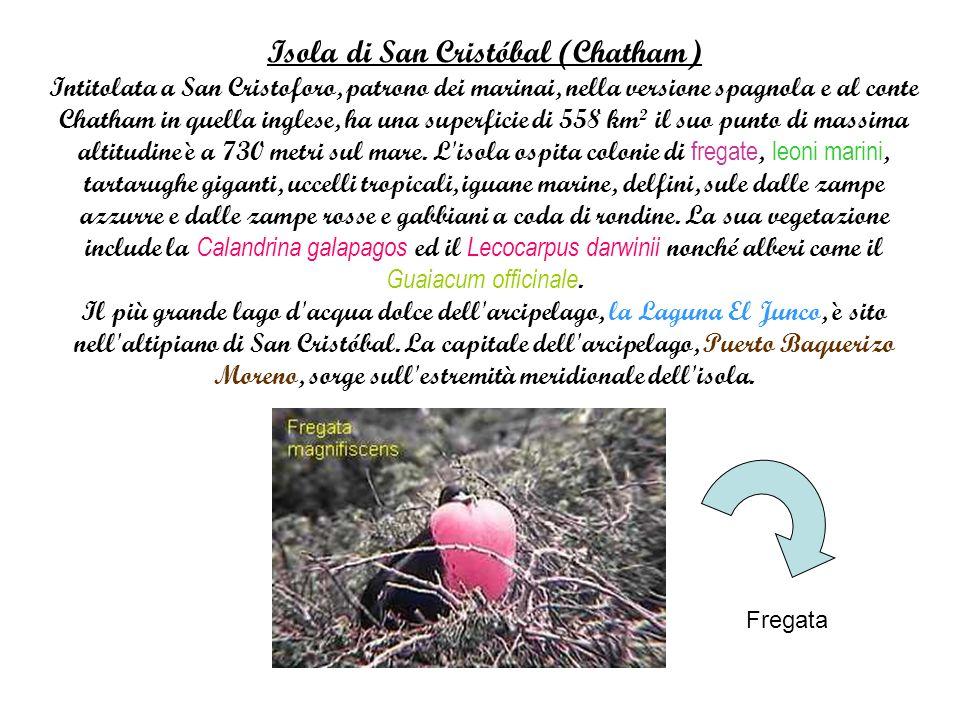Isola di San Cristóbal (Chatham) Intitolata a San Cristoforo, patrono dei marinai, nella versione spagnola e al conte Chatham in quella inglese, ha una superficie di 558 km² il suo punto di massima altitudine è a 730 metri sul mare.