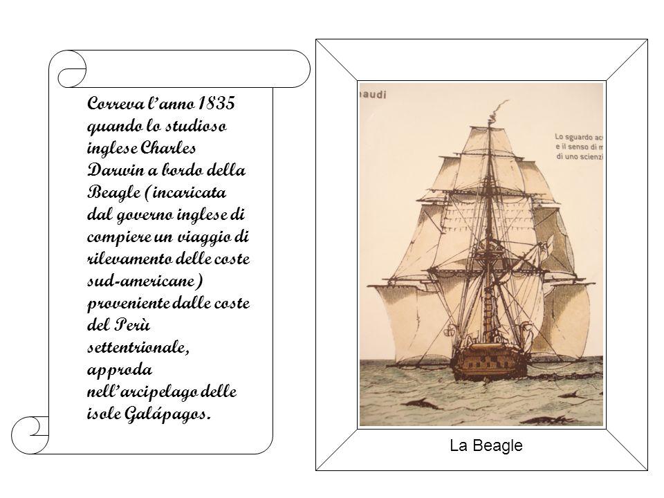 Correva lanno 1835 quando lo studioso inglese Charles Darwin a bordo della Beagle (incaricata dal governo inglese di compiere un viaggio di rilevamento delle coste sud-americane) proveniente dalle coste del Perù settentrionale, approda nellarcipelago delle isole Galápagos.