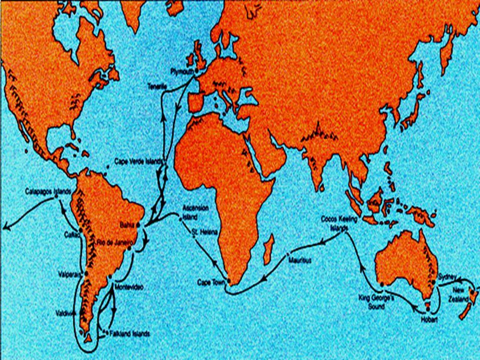 Darwin osserva che ci sono: Quindici specie di pesci marini (tra cui un Prionotus).