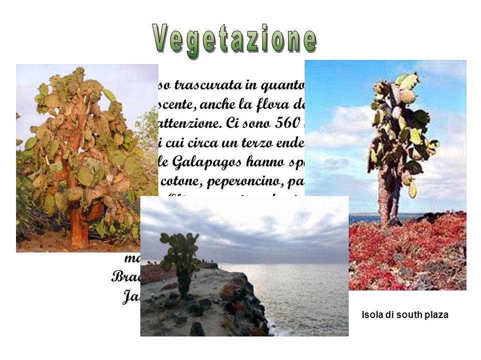Spesso trascurata in quanto meno appariscente, anche la flora delle isole merita attenzione.
