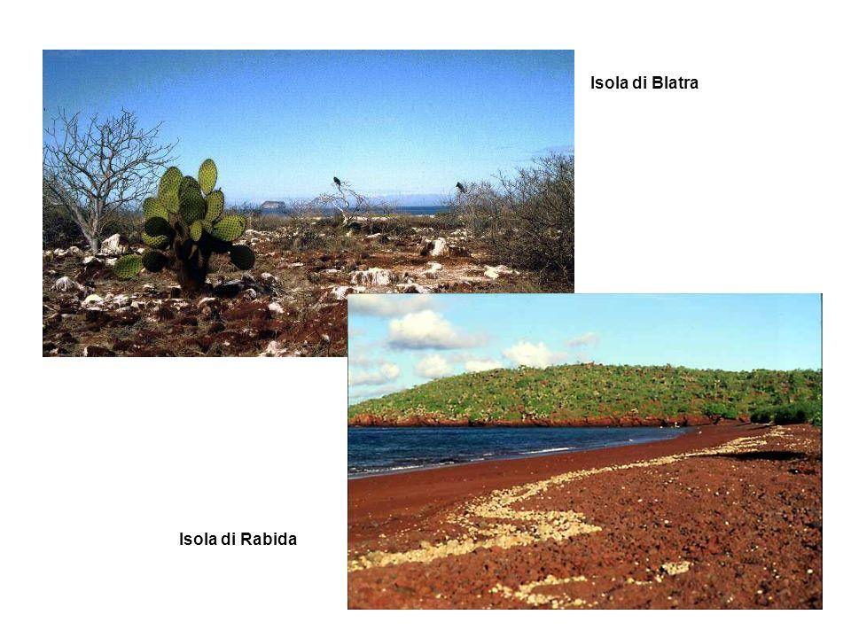 Isola di Blatra Isola di Rabida