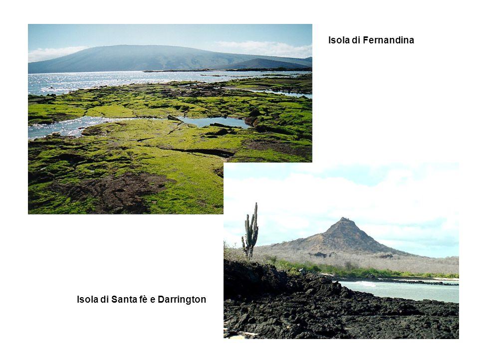 Isola di Fernandina Isola di Santa fè e Darrington